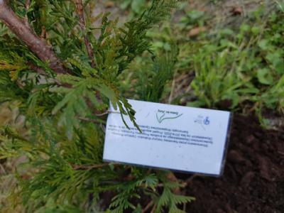 Galeria Rozmierka-90 krzewów