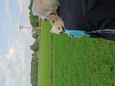Galeria Szkolenie psów w Izbicku